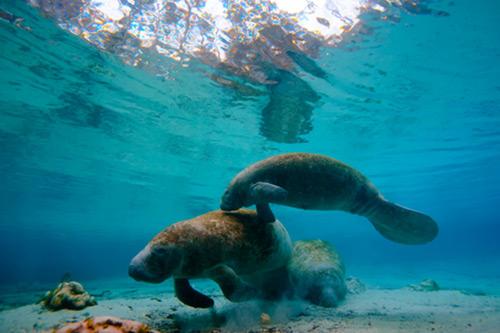 aquariums and things to do near anna maria island mote marine
