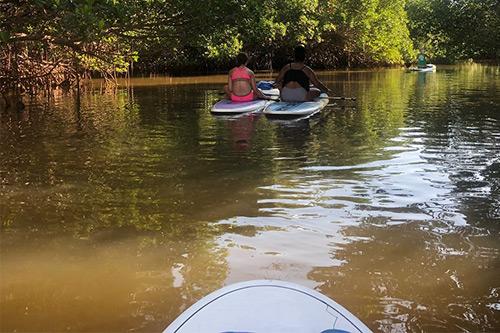 paddleboard tours on anna maria island